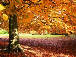 outono-lindo